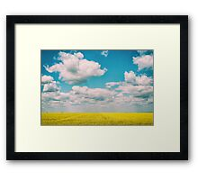 Yellow Rapeseed Flowers Field With Blue Sky Framed Print