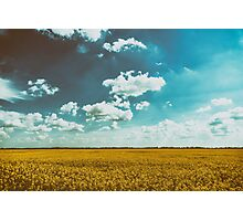 Yellow Rapeseed Flowers Field With Blue Sky Photographic Print