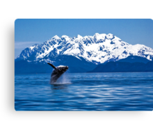 Whale breach Canvas Print