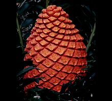 Cycad fruit by Shaun Swanepoel