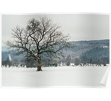 Glorious Winter Tree Poster