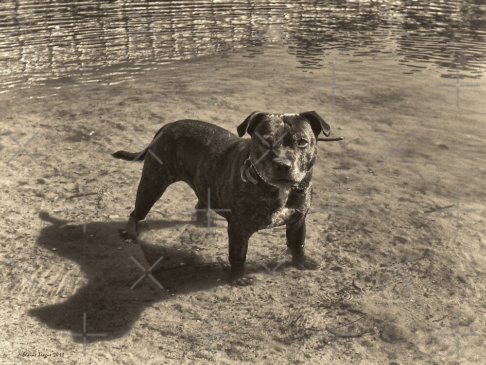 Forget the Camera, Where's the Stick? by Elaine Teague