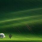 ... Ladies in White by Vlad Sokolovsky