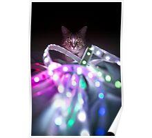 Disco Cat Poster