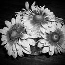 Flowers,black and white by Ana Belaj