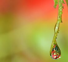 Garden Waterdrops 4 ' Apples'  by relayer51