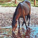 Brown Horse drinking from stream by martyee