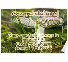 Featured Banner Ferns And Mosses Poster