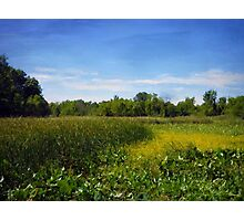 Sheldon Marsh - Summer Meadow 2 Photographic Print