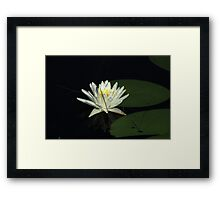 White Water Lily in a Lake Framed Print