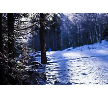 Snowflakes and Frozen Plants - Travel Photography Photographic Print