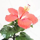 Hibiscus  by LindaLou1952