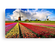 BULBS FIELDS Canvas Print