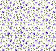 Chicory seamless pattern on white background by Kotkoa