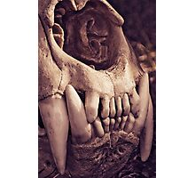Lion Skull Photographic Print