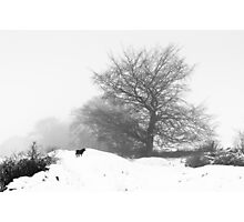 Winter Wood Photographic Print