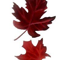 Clara's Leaf by Rebecca Wakefield