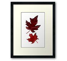 Clara's Leaf Framed Print