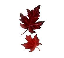 Clara's Leaf Photographic Print