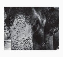 Close-up shot of Asian elephant head T-Shirt