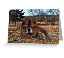 I'M HAVING DAYDREAMS ABOUT NIGHT THINGS IN THE MIDDLE OF THE AFTERNOON - CANINE PICTURE/CARD/PILLOW Greeting Card