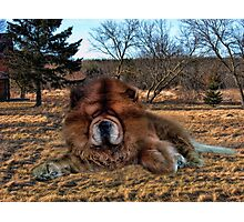 I'M HAVING DAYDREAMS ABOUT NIGHT THINGS IN THE MIDDLE OF THE AFTERNOON - CANINE PICTURE/CARD/PILLOW Photographic Print