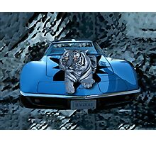 ILV2EAT-TIGER - CAR - PICTURE/CARD CREATIONS BY RAPTURE777 Photographic Print