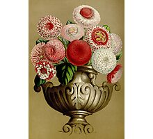 Red Bellis Perennis Flowers Photographic Print