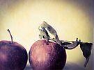Gravenstein Apples by Barbara Wyeth