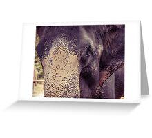 Close-up shot of Asian elephant head Greeting Card