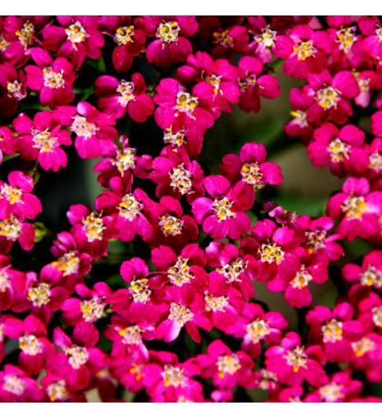 Little Pink Flowers Sticker