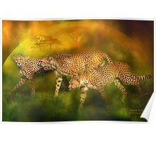 Cheetah World Poster