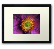 Textured Anemone flower Framed Print