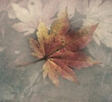 Fall leaves by jasonksleung