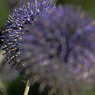 Purple Globe & Bee by Melodie Douglas
