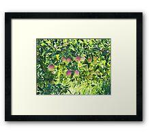Apples On The Tree Framed Print