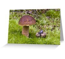 Bitter Bolete Greeting Card