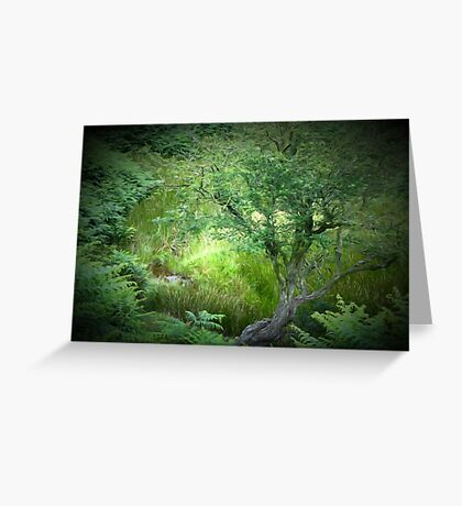 A tree near Cut Throat Bridge. Greeting Card