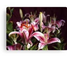 Lily Morning Canvas Print