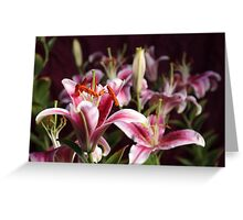 Lily Morning Greeting Card