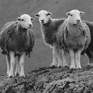 The Three Amigo's by Rob Parsons