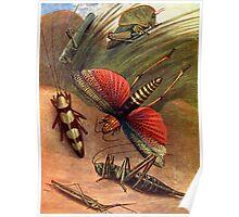 Grass Hoppers Poster