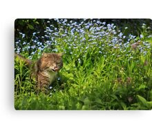Hungry kitty Canvas Print