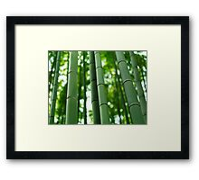 Bamboo forest stems close-up art photo print Framed Print