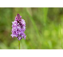 Scented Orchid Photographic Print