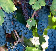 Grapes on the Vine I by Sherry Hallemeier