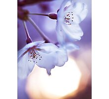 Beautiful cherry blossom and rising sun art photo print Photographic Print