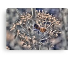 Honey bee on chive flower, hand coloured IR Canvas Print