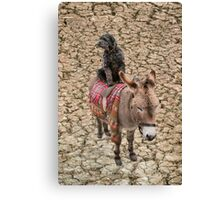 Travelling Donkey and Friend Canvas Print