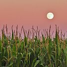 Moon at Dusk  by lorilee